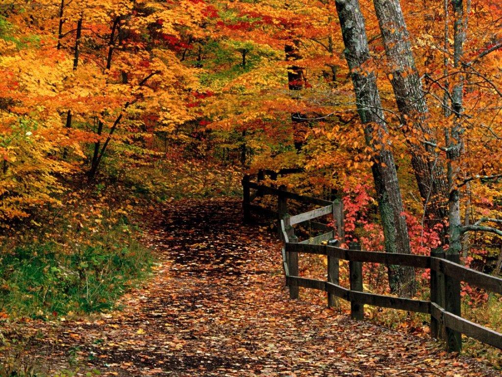 22 october 2011 shifting realities - Pics of fall scenes ...