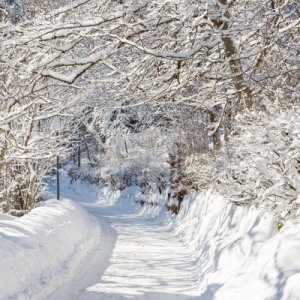 Image Source Page: http://www.123rf.com/photo_9828335_a-beautiful-day-in-winter-wonderland-snowcapped-trees-over-snowy-country-road.html