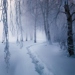 Image Source Page: http://incpire.com/photos/winter-wonderland