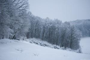 Image Source Page: http://freebigpictures.com/winter-pictures/winter-landscape/