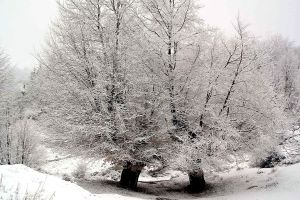 Image Source Page: http://www.copyright-free-images.com/full-image/nature-landscapes-copyright-free-images/winter-copyright-free-images/trees-winter-landscape.jpg-royalty-free-stock-photo.html