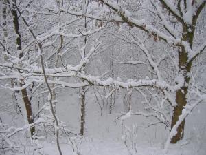 Image Source: http://fxpaper.fatalsystem.com/Wallpaper/winter-scene