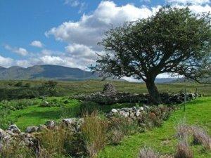 Image Source: www.123rf.com/photo_1446588_scenes-of-the-irish-landscape