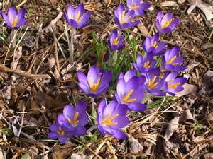 Image Source: www.healinglandscapes.org/blog2011/03/early-spring