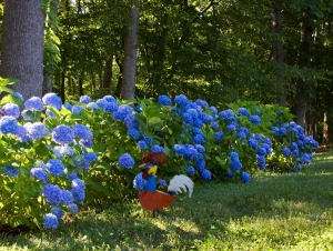 Image Source: www.sectlandscaping.com/topics/tag/blue