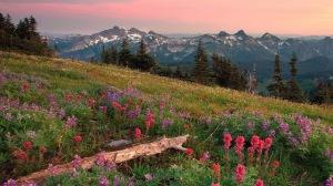 Image Source: http://1920x1080.info/summer-landscape-wallpaper/