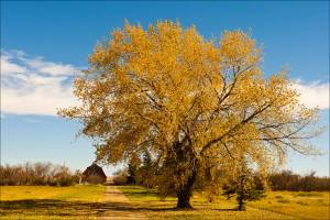 Image Source: http://christophermartinphotography.com/tag/fall-color-on-the-farm/