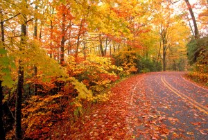 Image Source: www.insidegatlinburg.com/vacation-tips/when-do-the-leaves-change-color-in-the-fall