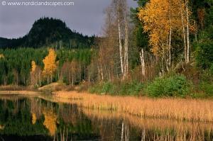Image Source: www.nordiclandscape.com/Woodlands-Spring-Summer