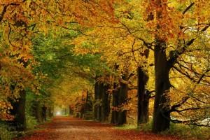 Image Source: http://changedesktop.com/2011/10/golden-october-wallpapers/