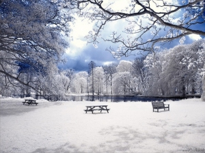 Image Source: www.beautifullife.info/art-works/snowy-landscapes