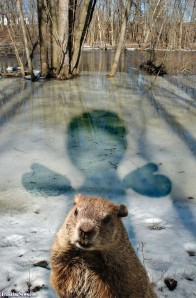 Image Source: www.freakingnews.com/Groundhog-picture