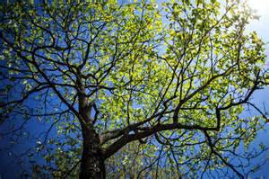 Image Source: http://www.eku.edu/photo/spring-scenes
