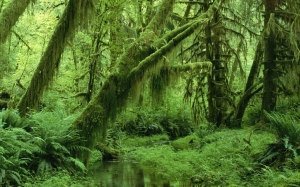 Image Source: http://www.wallpapermay.com/Nature/Summer/green_landscapes_nature_trees_jungle_forest_leaves_wildlife_summer_moss_monochrome_life_vines_192_48660