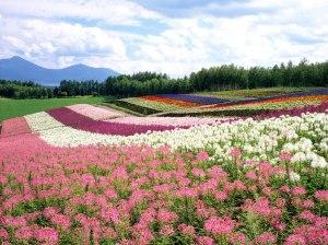 Image Source: http://ying0112.wordpress.com/2011/04/25/japan-hokkaido-landscape-d/