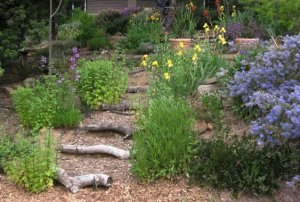 Image Source: http://www.fleamarketgardening.org/2012/09/18/how-to-take-great-garden-photos/