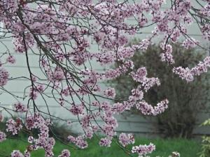 Image Source: http://www.melissakaylene.com/2014/03/spring-scenes.html