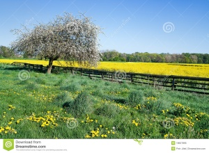 Image Source: http://www.dreamstime.com/royalty-free-stock-photo-spring-landscape-image18627895