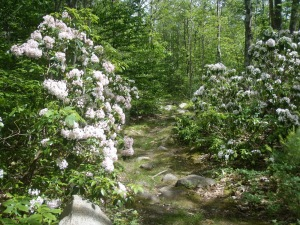 Image Source courtesy of: http://durhamcouncilofgardenclubs.blogspot.ca/2013/05/sustainable-beauty-landscape-plants.html
