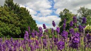Image Source: http://mslogica.com/2012/07/a-few-landscape-shots-for-you/landscape-2-july/