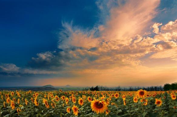 Image Source: http://www.outdoor-photos.com/_photo/2822722.jpg