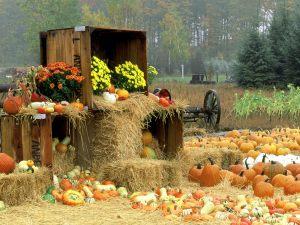 Image Source: http://ayay.co.uk/backgrounds/nature/autumn/Autumn-Roadside-Manistee-County-Onekama-Michigan.jpg