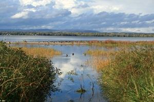 Image Source: http://www.fingeringzen.com/wp-content/uploads/2010/09/Ottawa_River_Ducks_September_28_2010_md.jpg
