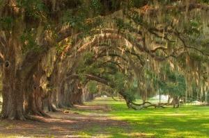 Image Source: http://2.bp.blogspot.com/_mpwmib3DcfA/TIL0l4dWDZI/AAAAAAAABCQ/Q8JNZ5Ktu1s/s1600/Tomotely+oaks.jpg