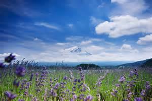 Image Source: http://www.poomillust.com/wp-content/uploads/2012/09/DSC_4182-2.jpg
