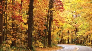 Image Source: http://hdwallpaper.freehdw.com/0001/nature-landscapes_hdwallpaper_october-road_1343.jpg