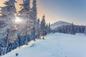 Image Source: http://c.tadst.com/gfx/750x500/winter-solstice.jpg?1