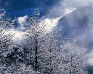 Image Source: http://hdwallpaper.freehdw.com/hdw001/beautiful_winter_landscapes-normal5.4.jpg