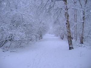 Image Source: http://www.rexwallpapers.com/images/wallpapers/landscape/winter-scene/winter_scene_28.jpg