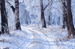 Image Source: http://www.publicdomainpictures.net/pictures/30000/velka/winter-landscape-1352711725z63.jpg