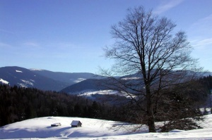 Image Source: http://www.zastavki.com/pictures/1280x1024/2008/Nature_Seasons_Winter_Winter_landscape_006469_.jpg