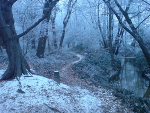 Image Source: http://upload.wikimedia.org/wikipedia/commons/9/92/Winter_Forest_Near_Erzhausen_II.jpg